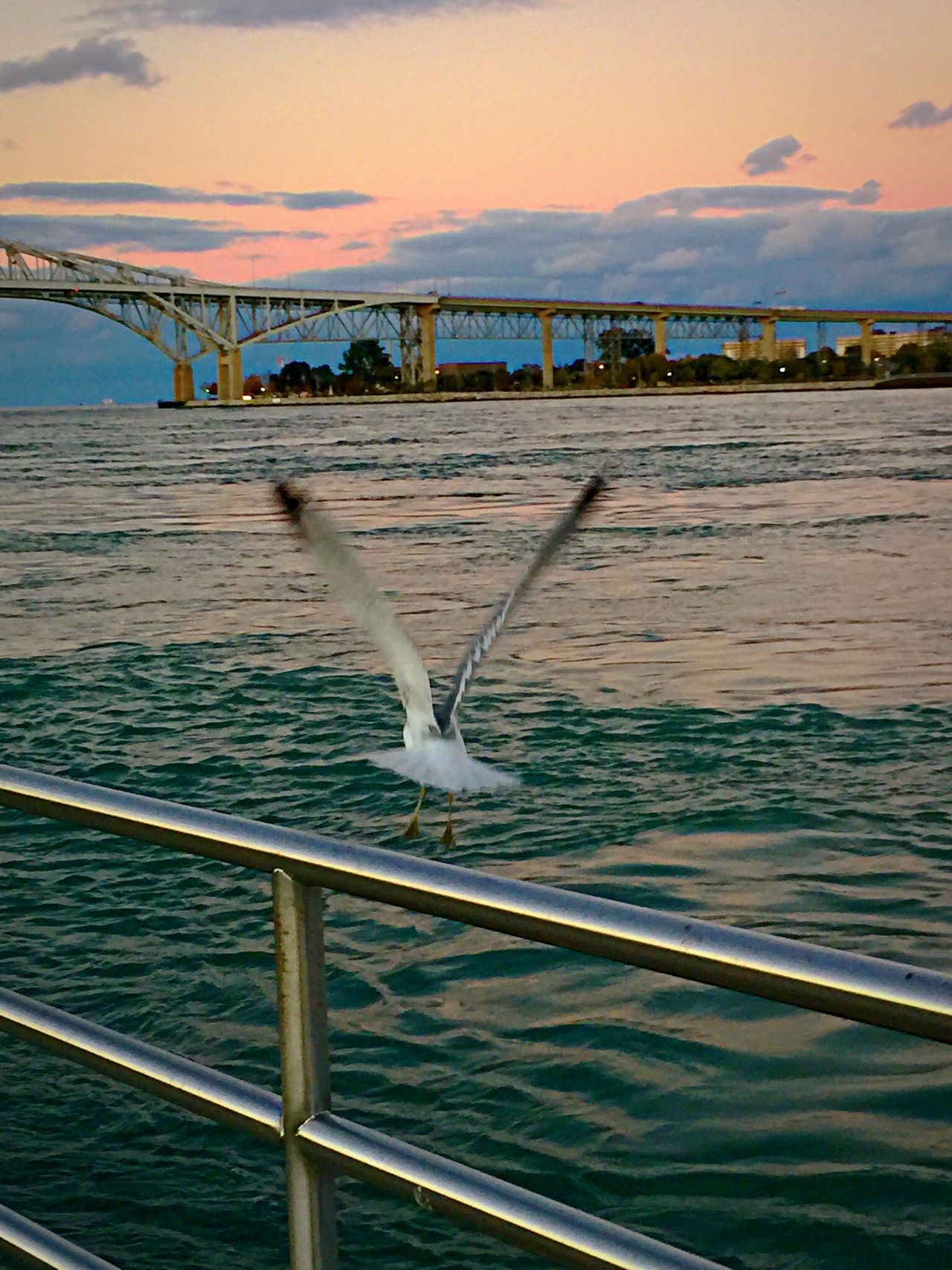 Clouds And Sky Sunset Seagull SEAGULL IN FLIGHT Water Bridge Blue Water Bridge Port Huron Michigan Pure Michigan