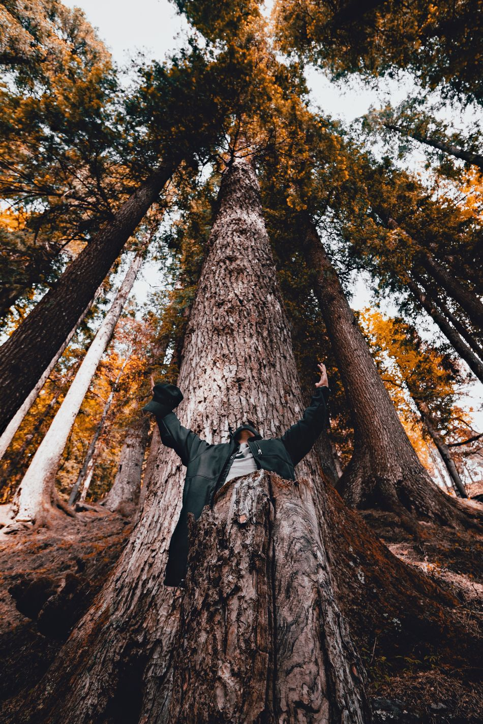 Praise the Lord People And Places Into The Woods Into The Wild Forest Tree Tree Trunk Low Angle View Wood - Material Nature Non-urban Scene WoodLand Adventure Outdoors Himalayas Lookingup Eyeem Market EyeEmBestPics EyeEm Best Shots EyeEm Tall - High Praising The Lord Tranquility Bark Tranquil Scene Scenics