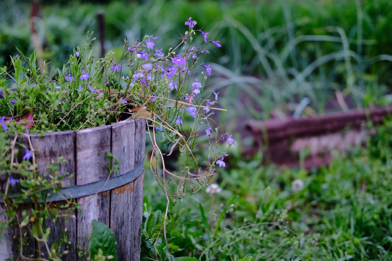 growth, plant, flower, nature, focus on foreground, no people, purple, outdoors, day, animal themes, beauty in nature, green color, grass, fragility, close-up, freshness