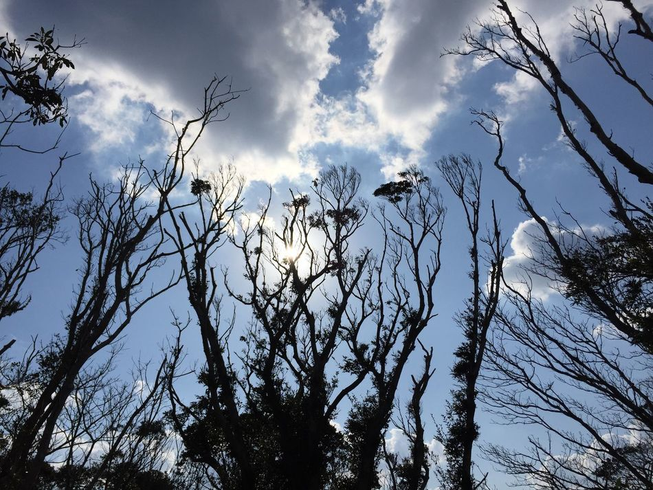 Low Angle View Cloud - Sky Sky Tree Nature Beauty In Nature No People Bare Tree Outdoors Branch Scenics Day Amami Island Kagoshima