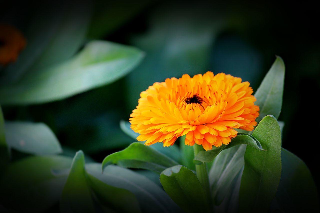 Flower Daylight Focus Outdoor Yellow EyeEm Nature Lover Yellow Flower Sunshine Green Leaf Backgrounds