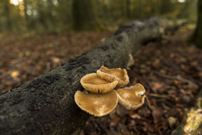 Autumn has hit! Autumn Autumn Autumn Colors Autumn Leaves Beauty In Nature Close-up Day Fall Fall Beauty Fall Colors Fall Leaves Fragility Freshness Growth Horizontal Landscape Mushroom Mushrooms Nature Netherlands No People Outdoors Tree Veluwe