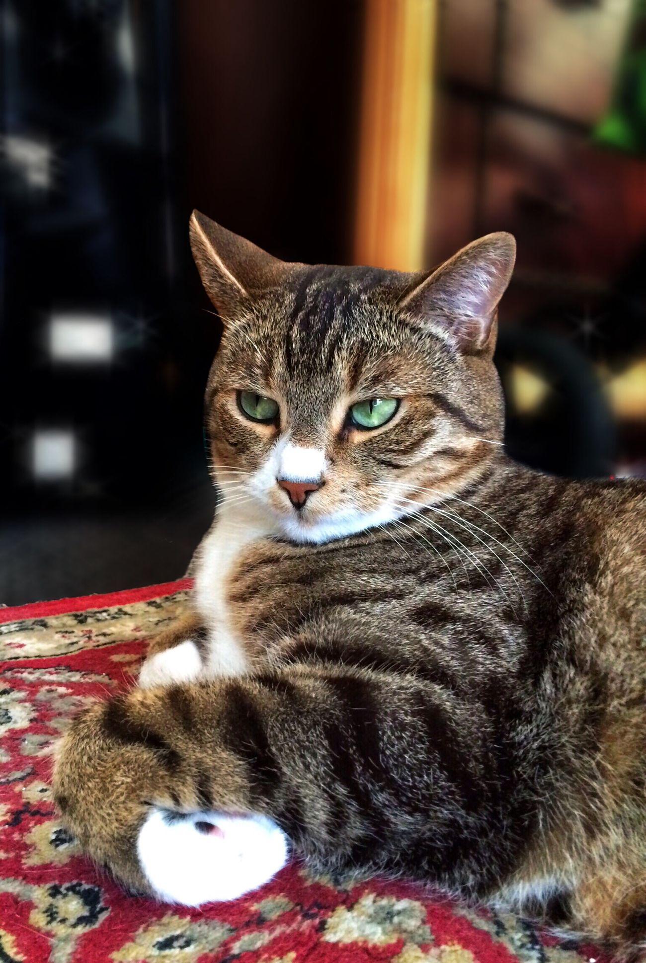 Good morning everyone. Cute Pets Cat Tadaa Community Mel&BomBi
