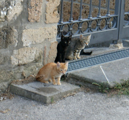 Three cats sit by an ancient stone wall and metal gate in an old Italian town. Ancient Town Animal Themes Black Cat Cats Cat♡ Day Feline Gate Italy Kittens Metalwork Pets Sitting Stone Stone Wall Stray Animal Tabby
