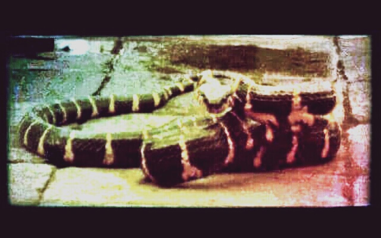 Snake Eyes . Cobra Show at Kota Tua Jakarta Indonesia . Animal Photography Animallovers EyeEm Animal Lover Canon Camera Enjoying The Show!