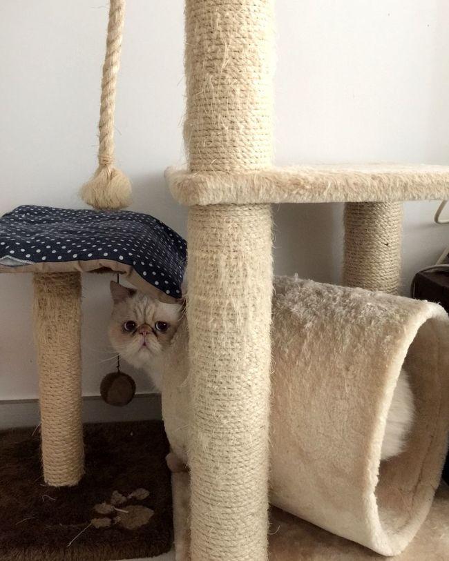 Animal OpenEdit Cute Pets Animals Cute Cats Cat Catsofinstagram Cats Cat♡ Cat Lovers