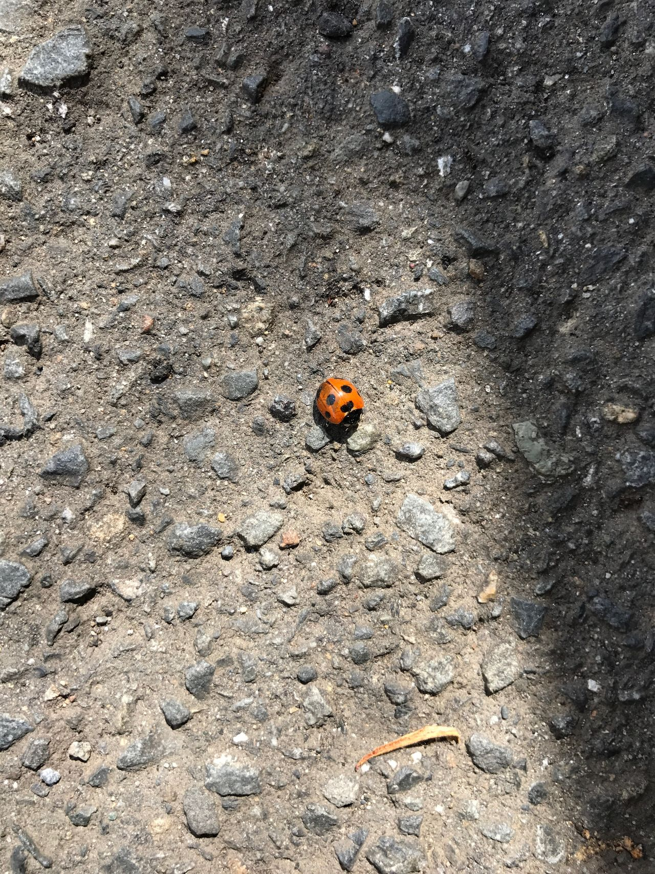 One Animal Animal Themes Insect Animals In The Wild High Angle View Wildlife Day Outdoors No People Ladybug Animal Wildlife Nature Tiny Close-up Ladybird Ladybeetle