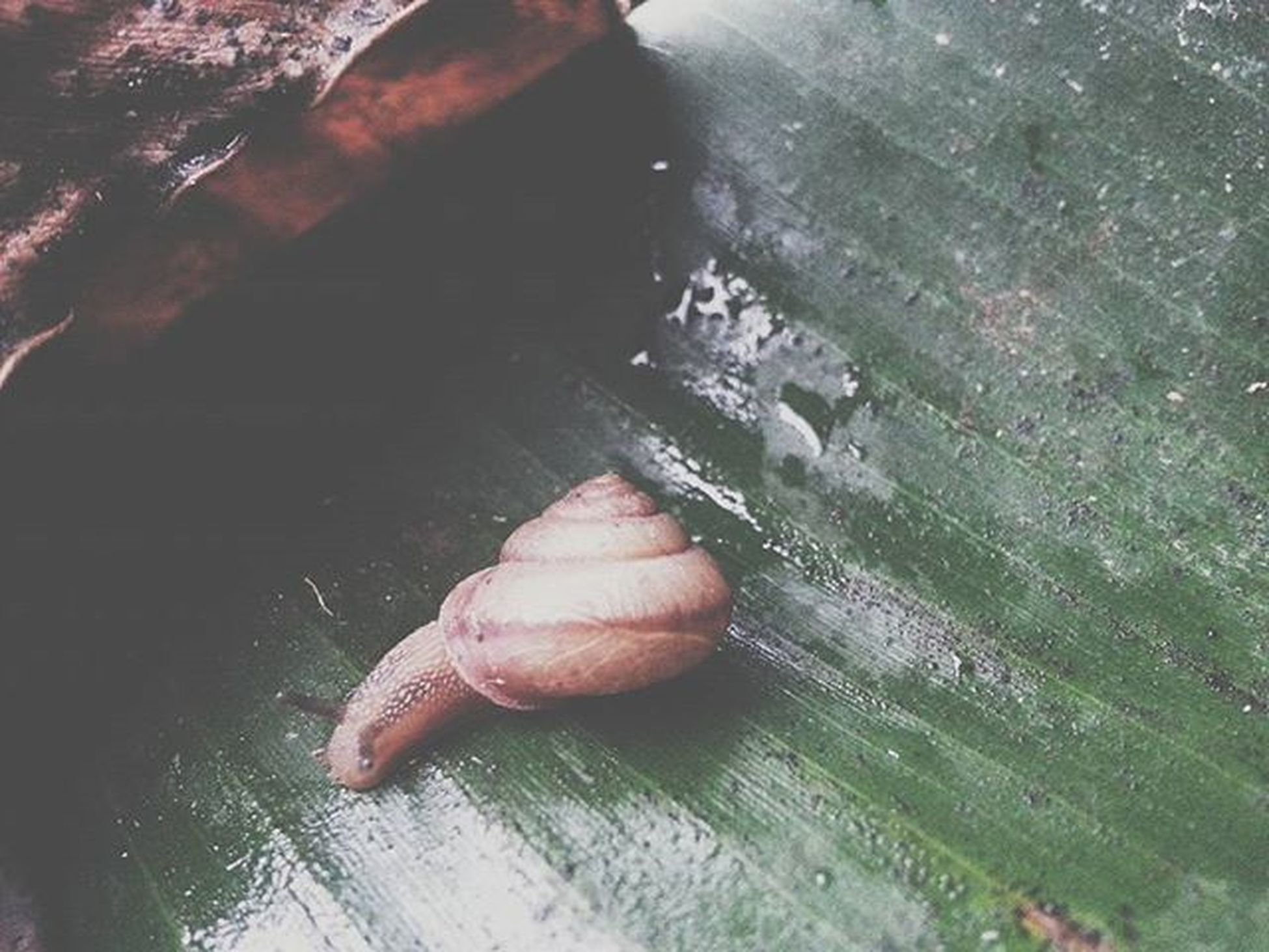 Something Like Oceanic Slow Snail Moody Maui Upcountry Mobilephotography Vscocam Vscophile Vscomaui
