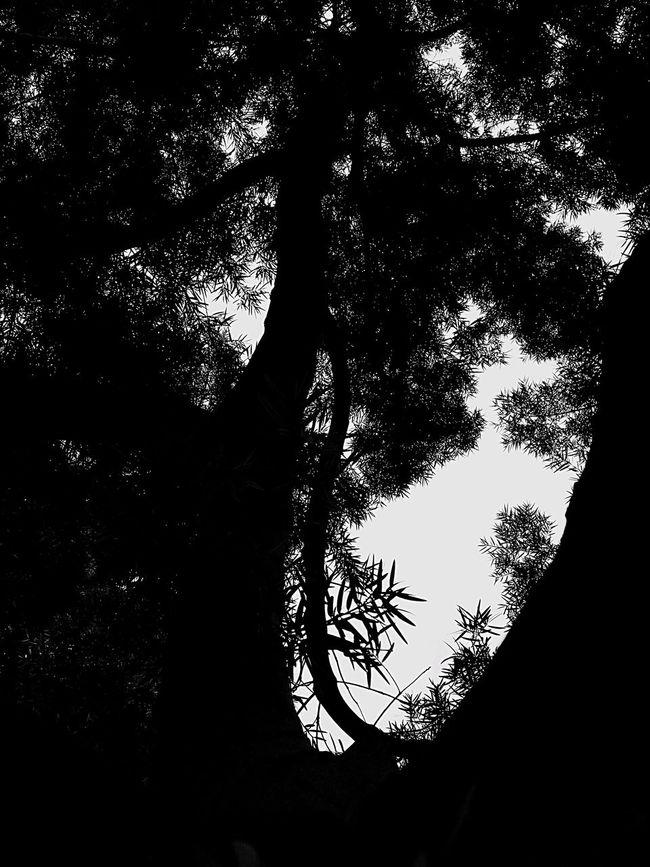 Hugging A Tree Hug A Tree EyeEm Best Shots - Black + White Nature Lover CaptureTheMoment Best Eyeem Pics EyeEm Best Shots First Eyeem Photo Eyeem Market Where I Live OceansideCA Showcase July The Great Outdoors - 2016 EyeEm Awards Artistic Expression Enjoying Life B&W Portrait
