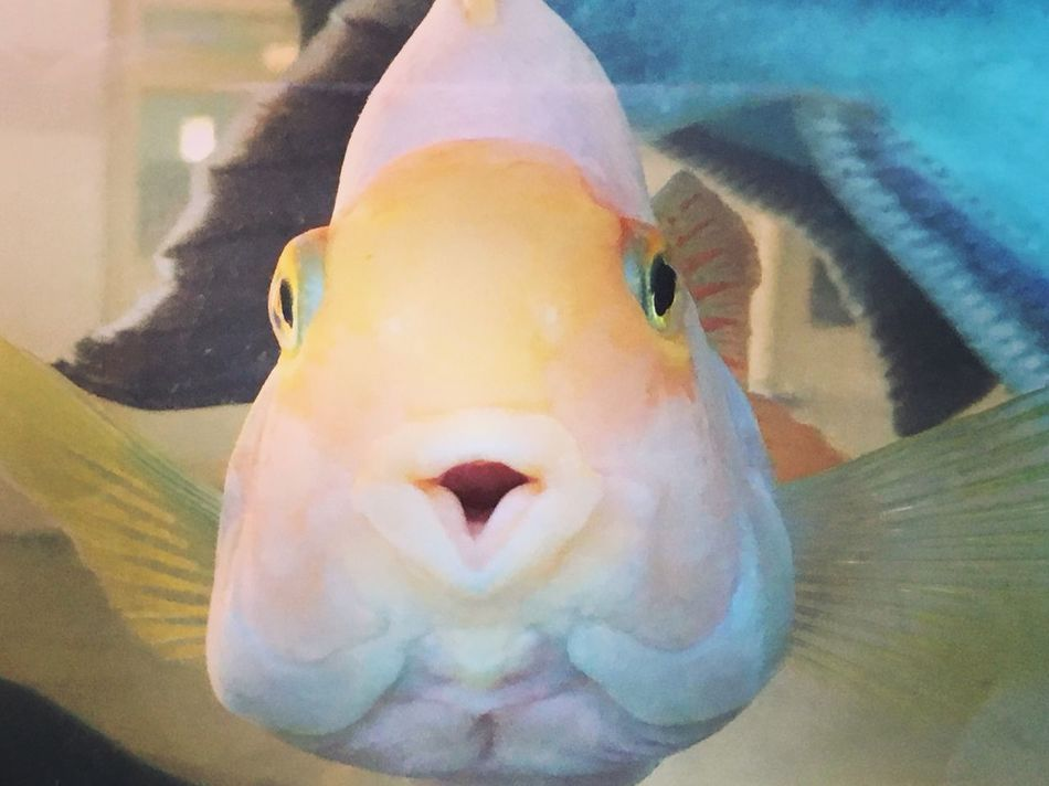 How nicely this cute fish is posing to my camera!!!! Fish Swimming Aquarium Close-up Portrait Water