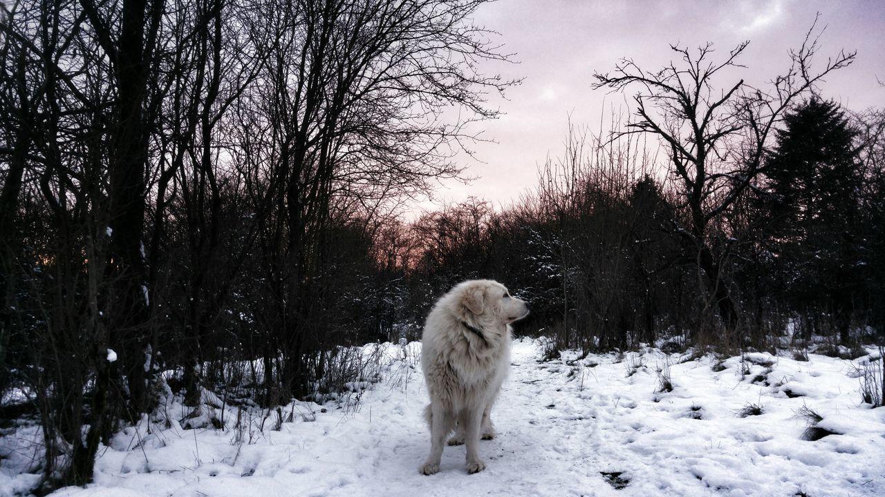 White_Dog #Beautiful Day #blackandwhite #Cold #batman #filipino #dogs #mydog #good Dog #nature_collection #EyeEmNaturelover #nature #perfectweather #snow #ice #tree #sky #clouds #landscape #grayskies #white Dog #Winter