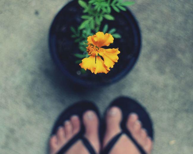 Summertime Summer Container Gardening Flowers Marigolds Feet Selfie