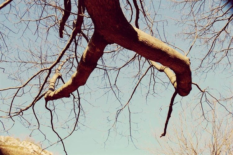 Tree Bare Tree Branch Tree Trunk Low Angle View Nature Outdoors Sky Day No People Dried Plant
