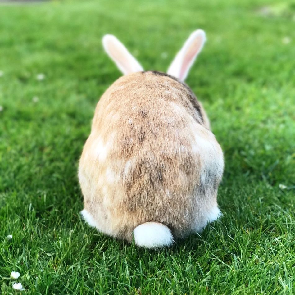 ❤️🐰 Grass One Animal Pets Domestic Animals Animal Themes Mammal Day Lying Down Outdoors No People Close-up Rabbit EyEmNewHere IPhone7Plus Hasi Rabbits 🐇 Rabbit ❤️