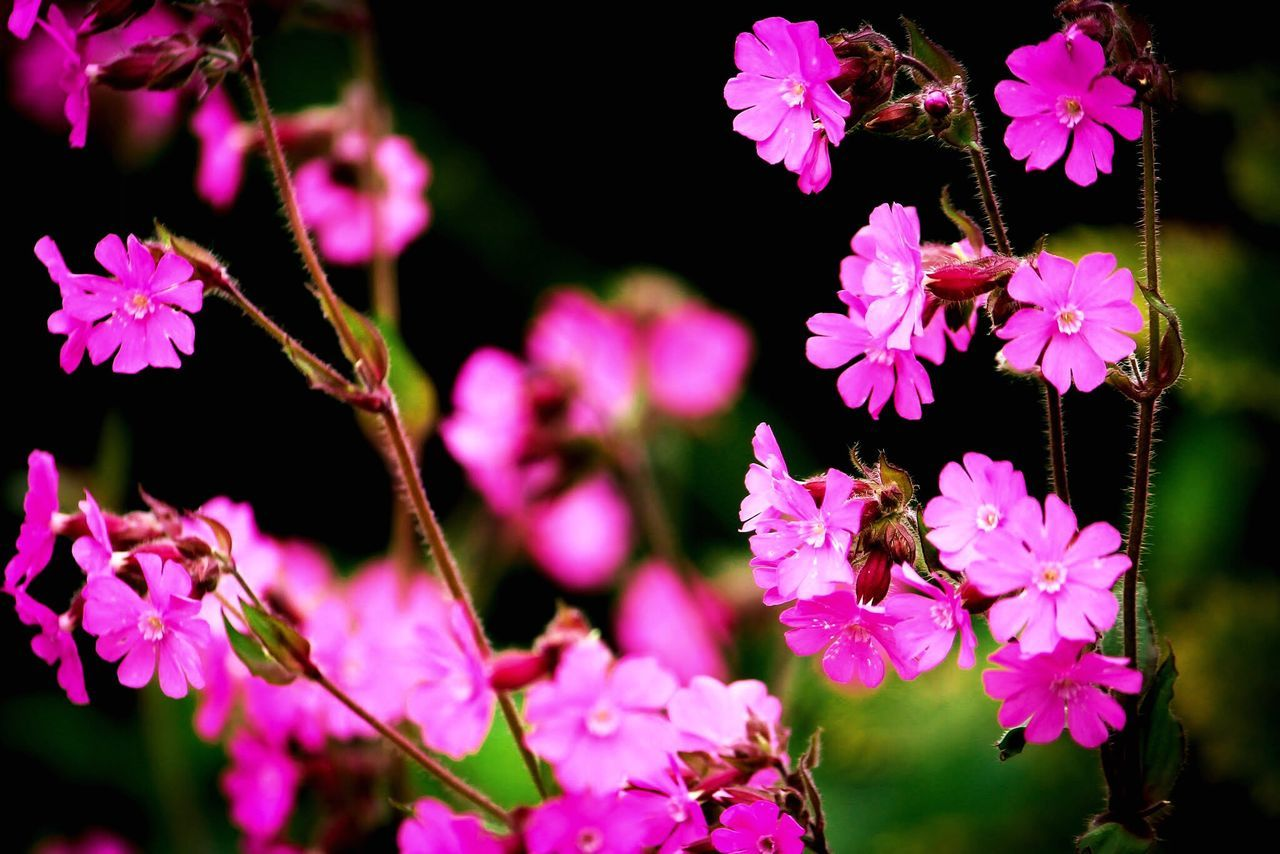 Focus the out of focus Flower Fragility Pink Color Beauty In Nature Blooming Delicate Just To Click