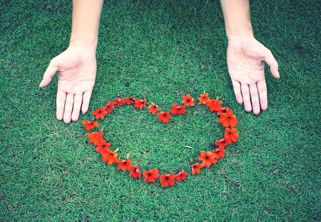 Red flowers arranged in a heart shape. Flower Flowers Heart Red Grass Hand Love Open Edit OpenEdit