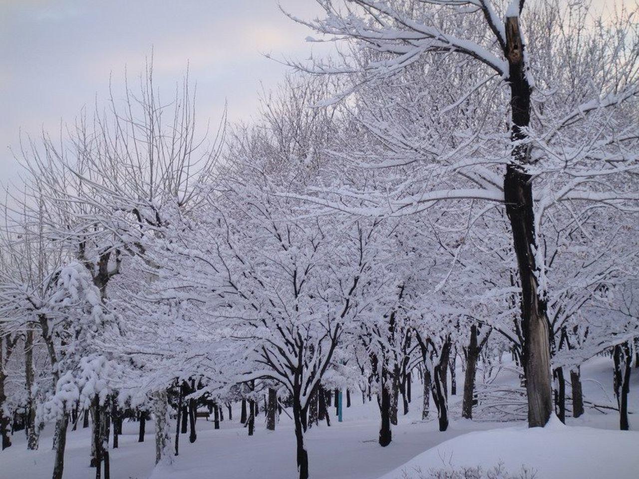 Snow Incheon South Korea Snow Trees