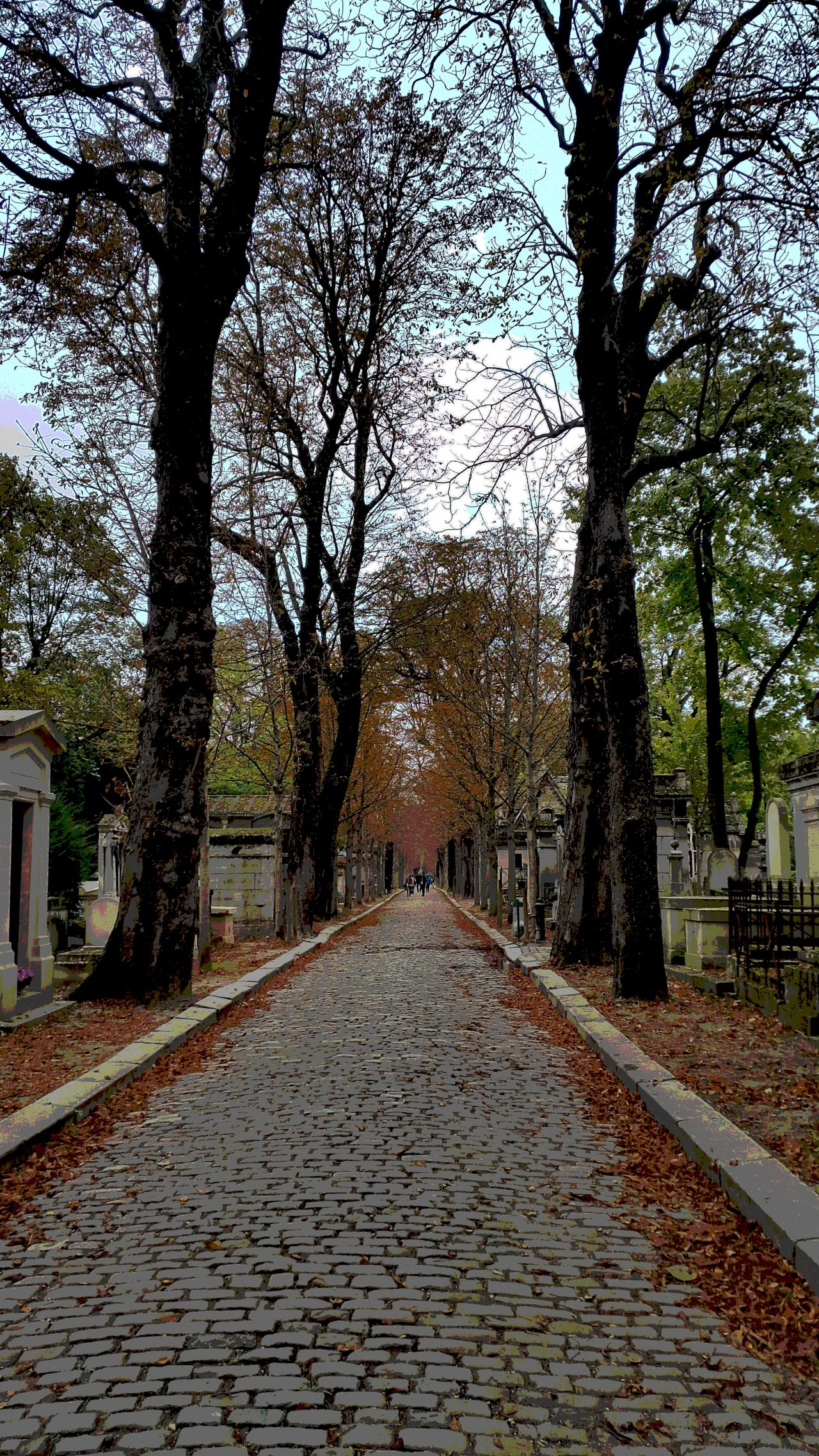Autumn Cobblestone Cobblestone Streets Diminishing Perspective Footpath Nature Nature Old Road Paris Scene Pathway Pere La Chais Père Lachaise The Way Forward Tranquility Traveling Tree Treelined Vanishing Point