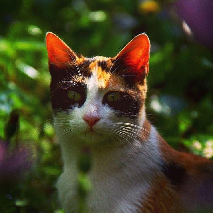 Trafo Kedi Miyav DirenKedi ?