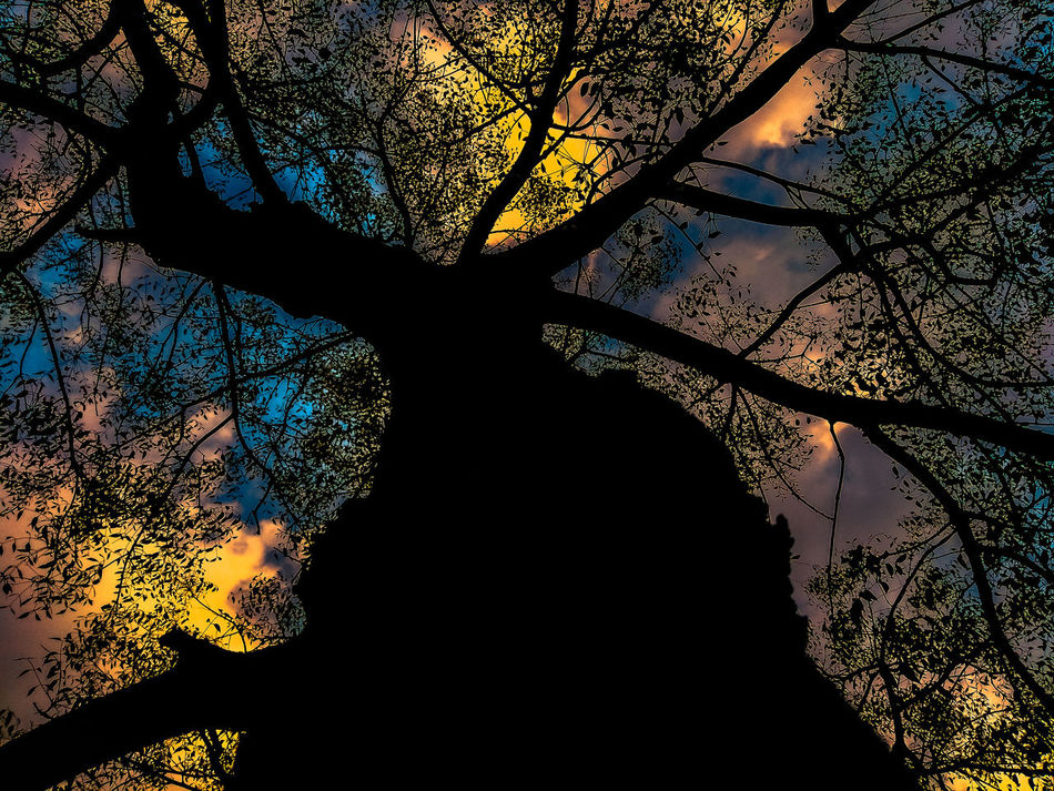 Beauty In Nature Blue Sky Branches Close-up Cloud - Sky Dark Darkness And Light Day Growth Leaves Light And Shadow Low Angle View No People Outdoors Scenics Silhouette Sky Sunrise Tree Tree Trunk Yellow