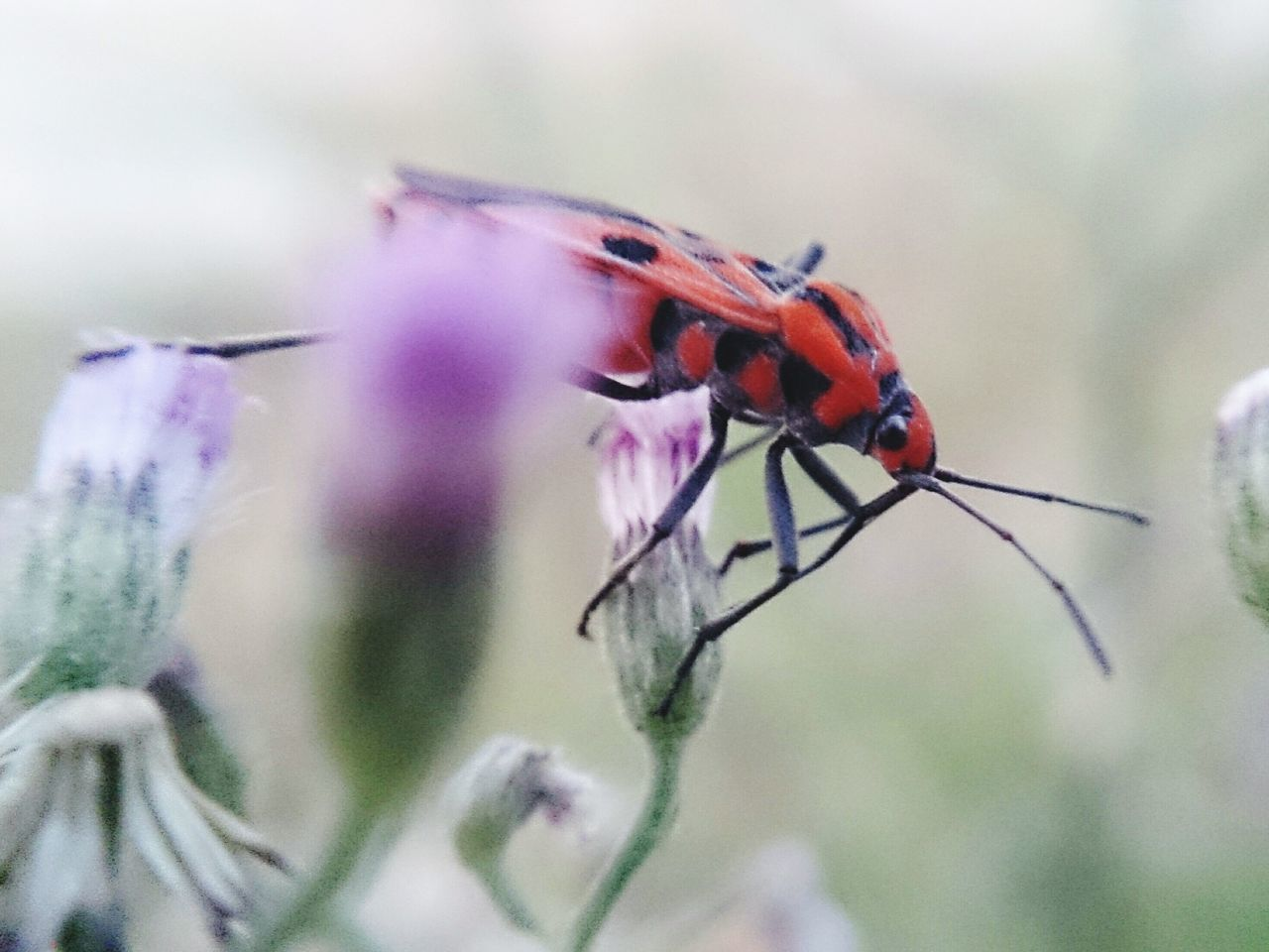 insect, animals in the wild, animal themes, nature, plant, one animal, no people, close-up, fragility, outdoors, growth, day, animal wildlife, flower, beauty in nature, perching