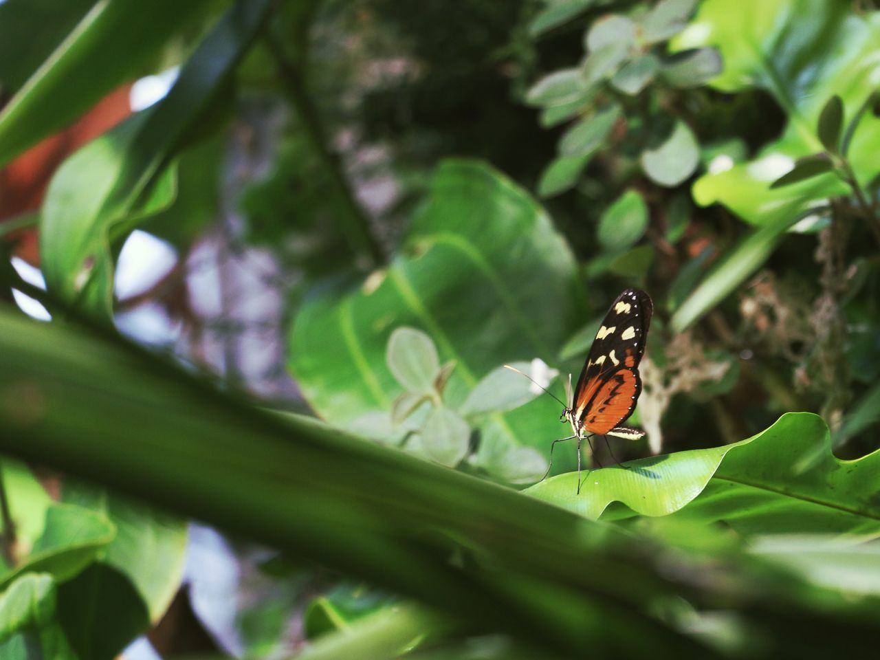 Beautiful stock photos of rainforest, Animal Themes, Animal Wildlife, Animals In The Wild, Butterfly - Insect