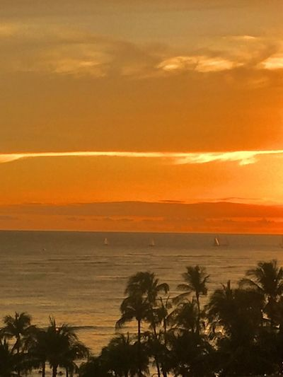 Waikiki Sunset Pacific Sunset Pacific Ocean Sky Pacific Sky Oahu Tropics Sailboats Oahu, Hawaii No People Waikiki Beach Tropical Island Pacific Ocean View Oahu / Hawaii Paint The Town Yellow The Week On EyeEm Been There. Lost In The Landscape Second Acts Perspectives On Nature Island Of Oahu, Hawaii An Eye For Travel