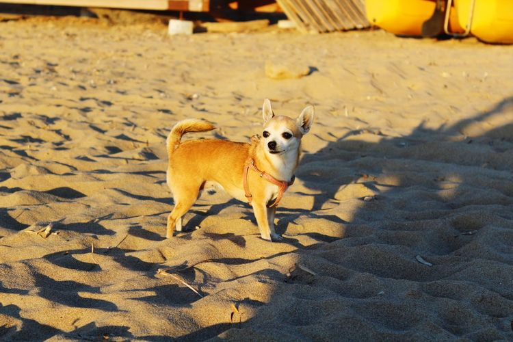 EyeEm Selects Dog Beach Sand Pets Animal Domestic Animals Outdoors One Animal Day Animal Themes No People Mammal Fontanamare Sardegna Sardinia Italy🇮🇹 Sud Scenics Dog Love Dog Days Pets And Animals Dogoftheday HappinessFull Length