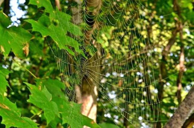 Spiderweb Forest Photography Forest Collection Walking In The Woods Bug Collection Focus On