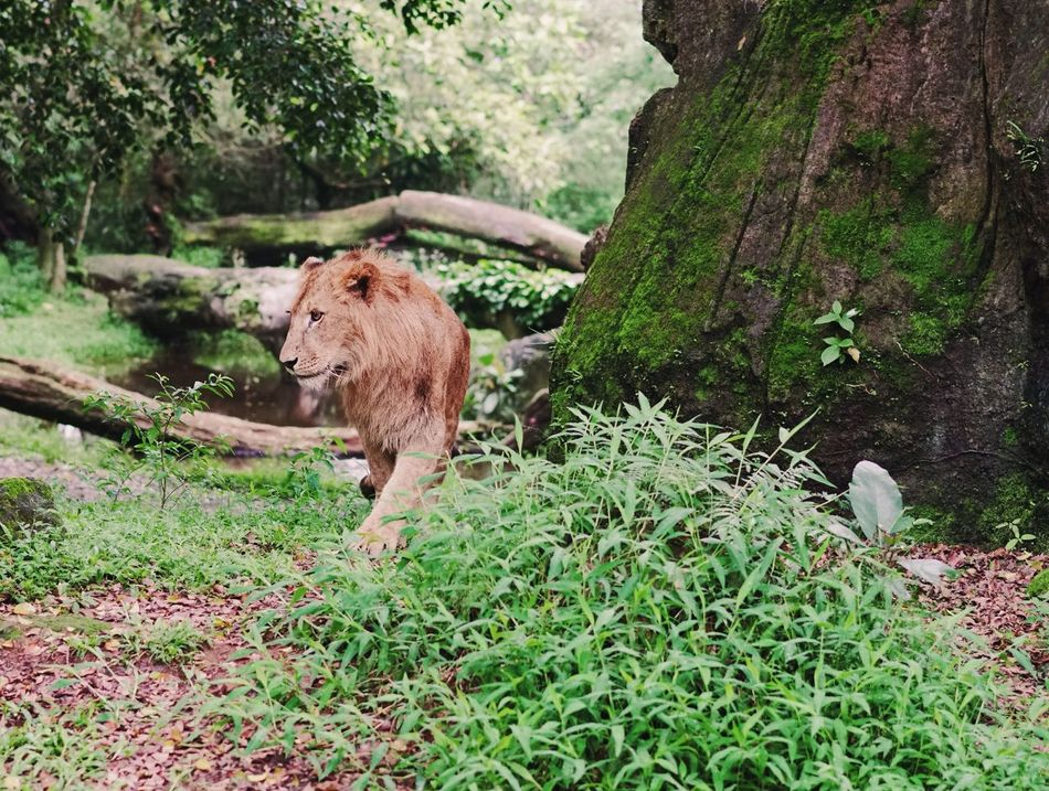 Nature's Diversities Animals Wildlife Nature Safari