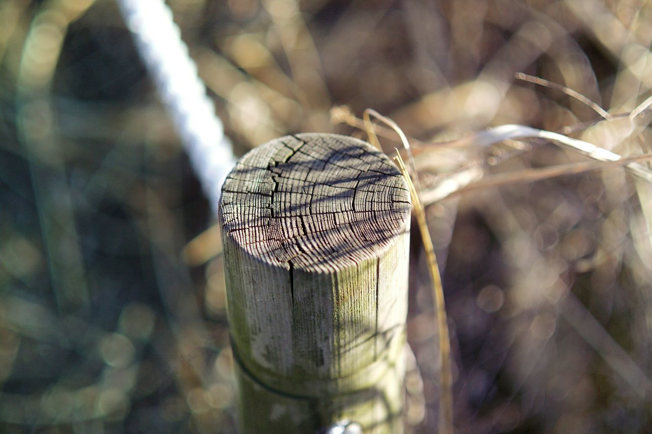 Sunlight Focus On Foreground Close-up No People Nature Outdoors Annual Ring Tree Ring Nature_collection Nature Photography Feeling Inspired