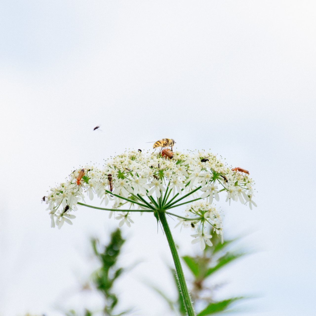 Crowded crowded insect photography insects Insects beautiful nature