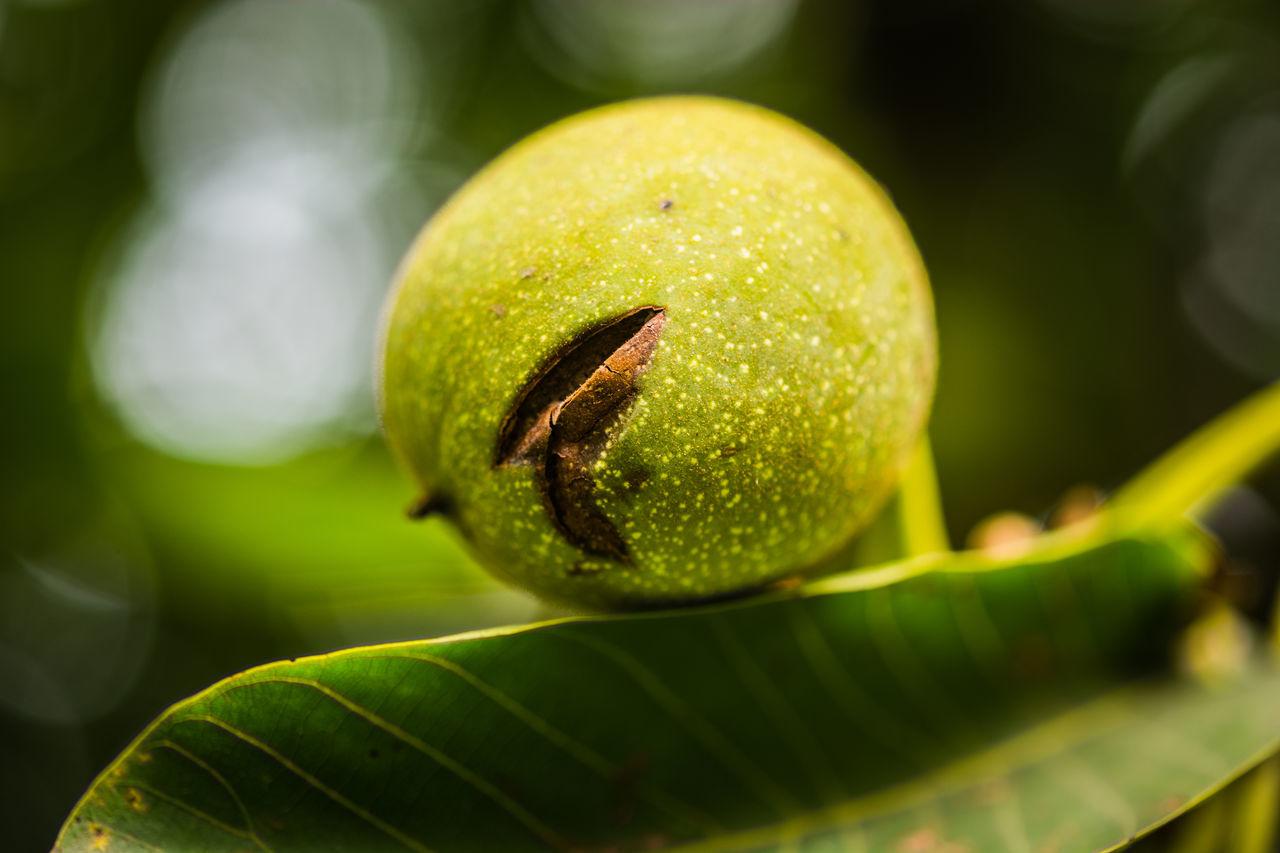 Close-Up Of Raw Fruit Growing Outdoors