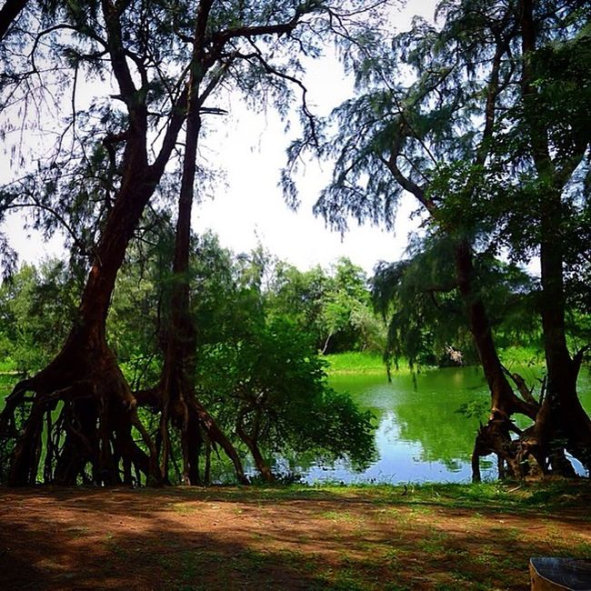 How peaceful and beautiful the country is! Taiwan 苗栗 濕地 森林公園