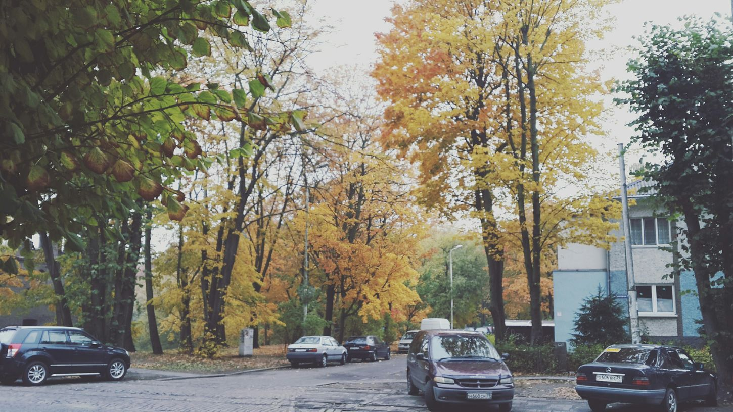 EyeEmBestPics Nature Open Edit Eyeemnaturelover The Moment - 2015 EyeEm Awards Autumn Colors Walking Around Enjoying Life Kaliningrad/kenigsberg See What I See