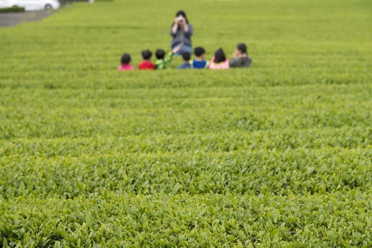 landscape of green tea field at Osulloc in Jeju Island, South Korea Adult Adults Only Agriculture Childhood Day Field Freshness Grass Green Tea Field Growth JEJU ISLAND  Nature Osulloc Outdoors People Real People Sitting Togetherness Women Young Adult