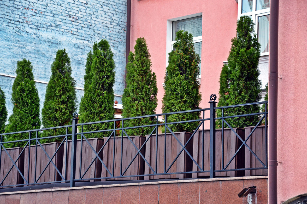 Architecture Building Exterior Built Structure Day Estetique_beauty Fur-tree Green Green Color Growth Ivy Nature No People Outdoors Plant Tree