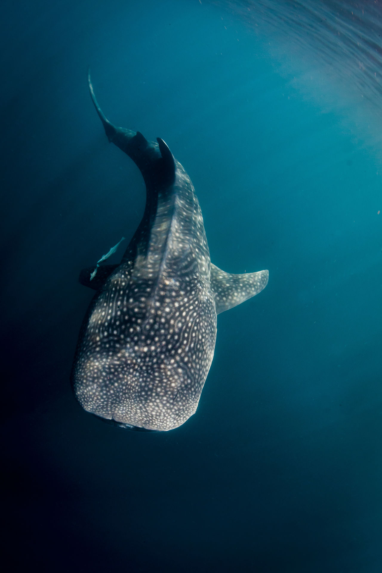 Beautiful stock photos of underwater, Animal Themes, Animal Wildlife, Animals in the Wild, Beauty in Nature