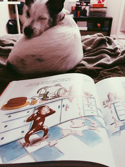 He falls asleep better if he has a bed time story first. Bed Time Stories Curiousgeorge Indoors  Animal Representation Home Interior No People Animal Themes Table Childhood Bedroom Close-up