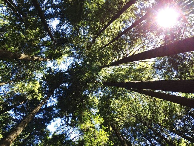 grouse grind🗻 Mountains Trees Sun Grouse Summer Excercising Green