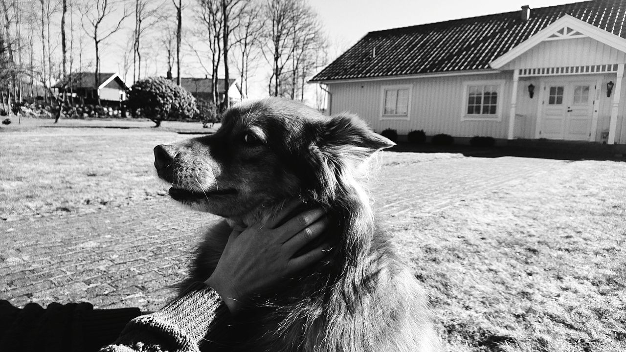 Dog House One Animal Pets Mammal Domestic Animals Outdoors No People Day Close-up Sky Built Structure Architecture Building Exterior Animal Themes Blackandwhite XPERIA Sony Xperia
