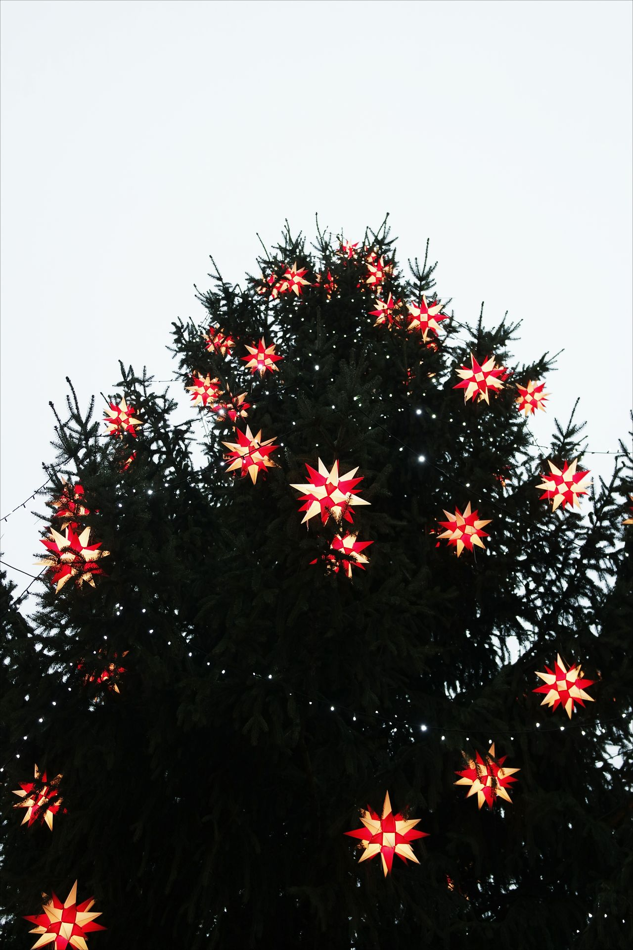 Christmas Tree Tree Celebration Christmas Red No People Sky Christmas Decoration Nature Outdoors Day Close-up