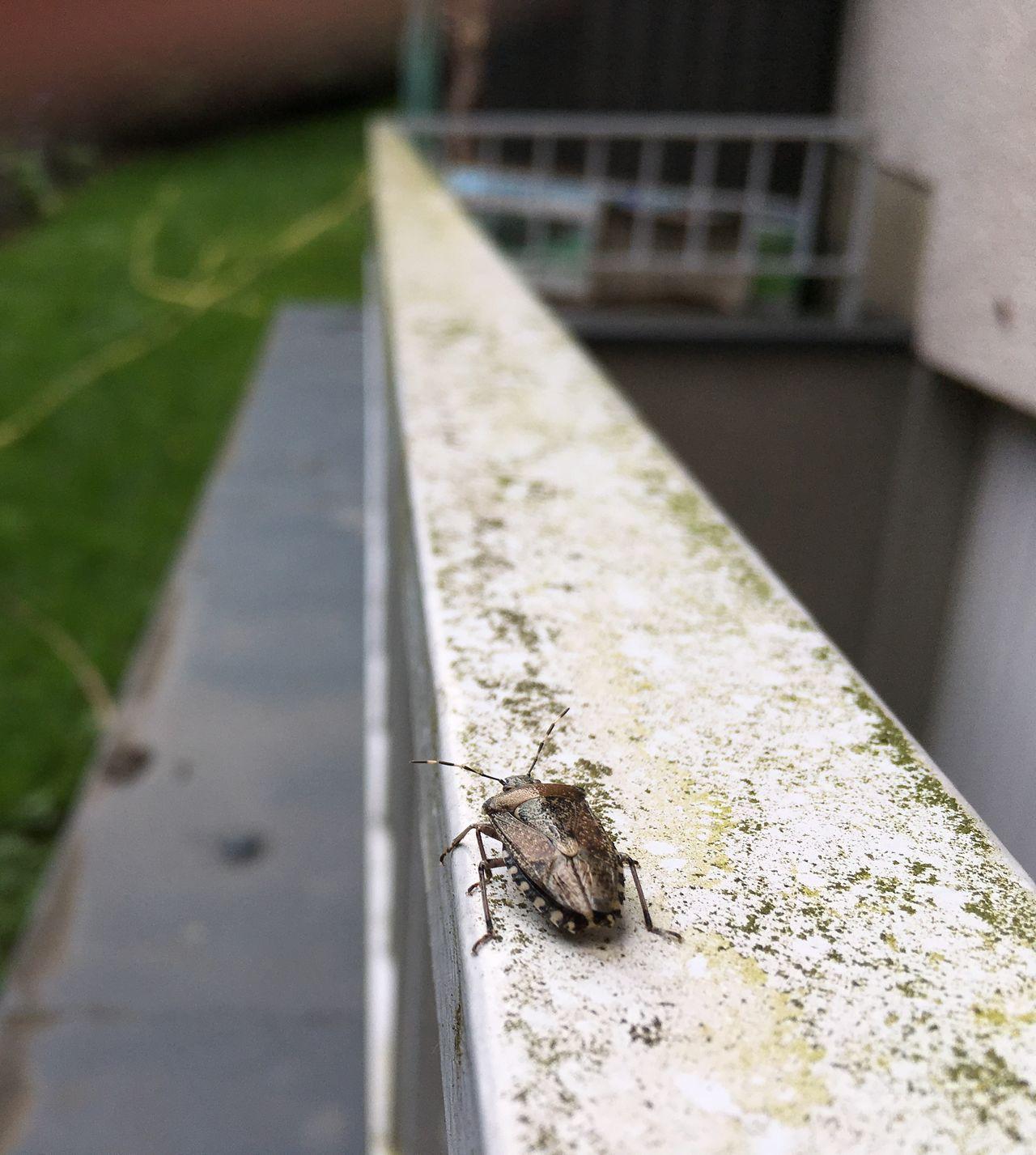 Long way Animal Themes Animal Wildlife Bug Ceiling Close-up Garden Hand Rail Insect One Animal Outdoors Stink Bug Stinkbug