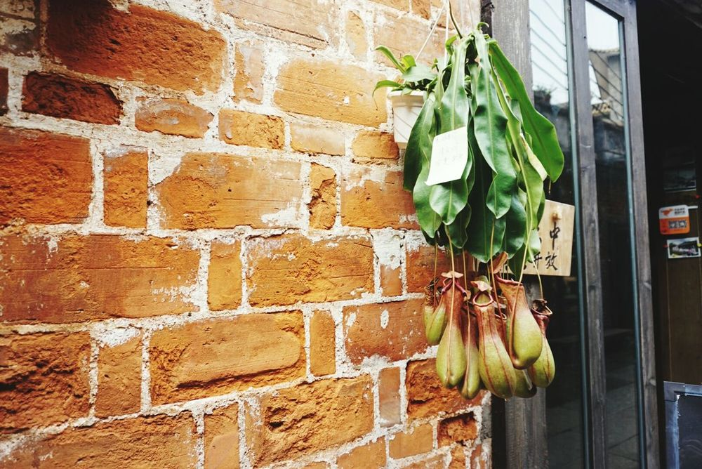 Wall - Building Feature Brick Wall Built Structure Architecture Building Exterior Plant No People Leaf Growth Close-up Outdoors Day Creeper Plant
