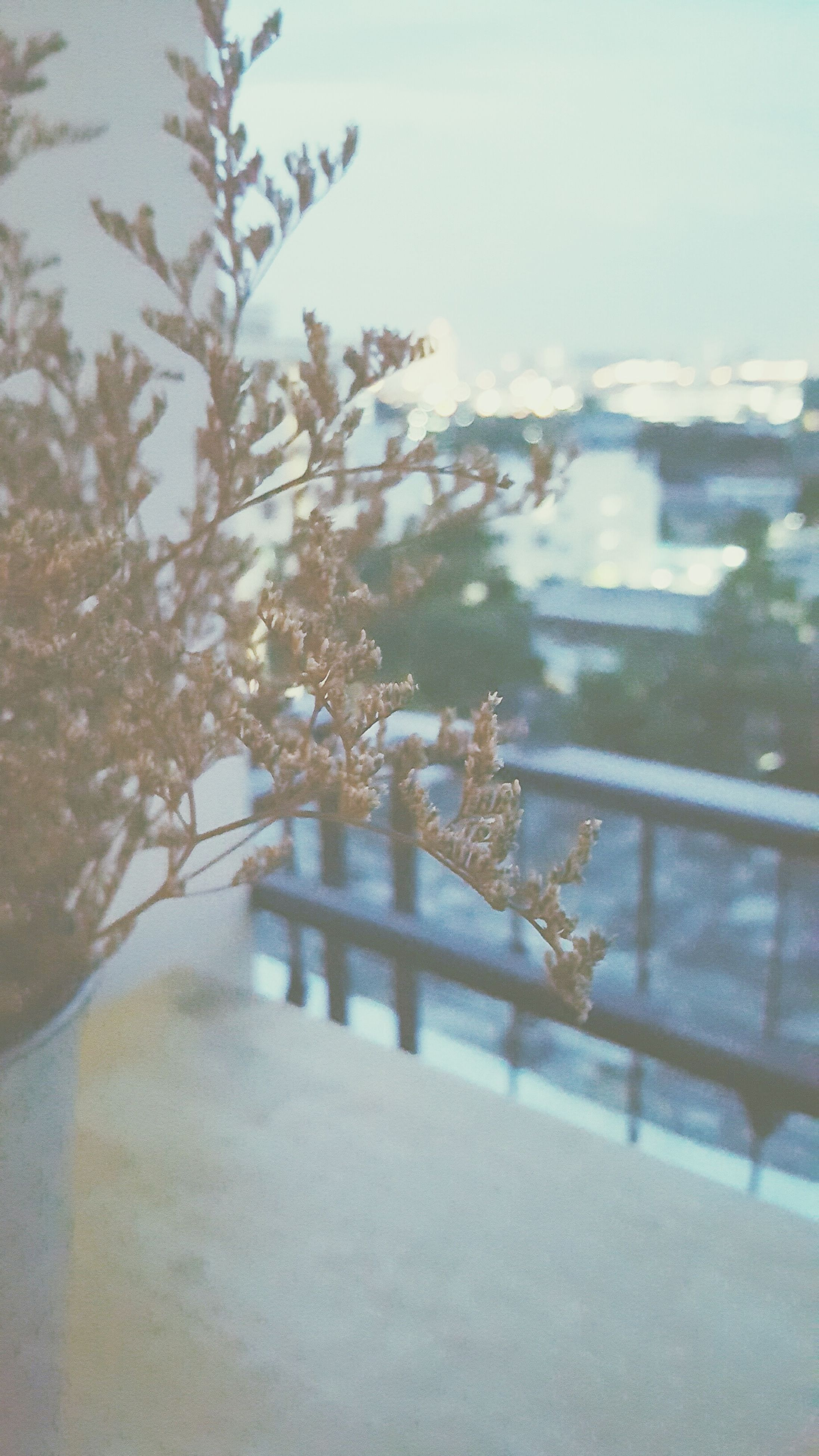 selective focus, plant, snow, window, winter, transportation, close-up, city, growth, day, nature, sky, no people, focus on foreground, snow covered, uncultivated, journey