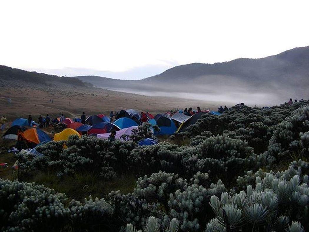 Bunga Edelweiss , Camp Pendaki dan Kabut Pagi di Alunalunsuryakencana Gununggede Jawabarat . Kameraprosumer Fujifilm 2009 . Mountains Morning Fog Volcano Camping Adventure