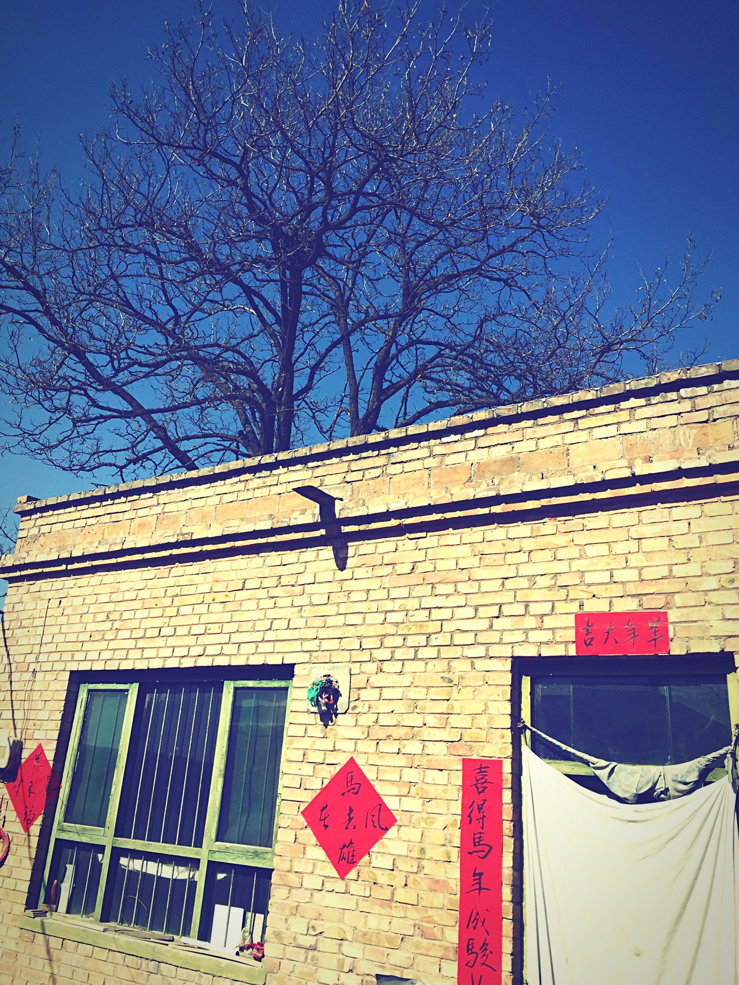 building exterior, architecture, bare tree, built structure, blue, low angle view, tree, house, sky, branch, window, clear sky, sunlight, residential building, residential structure, shadow, no people, outdoors, red, day