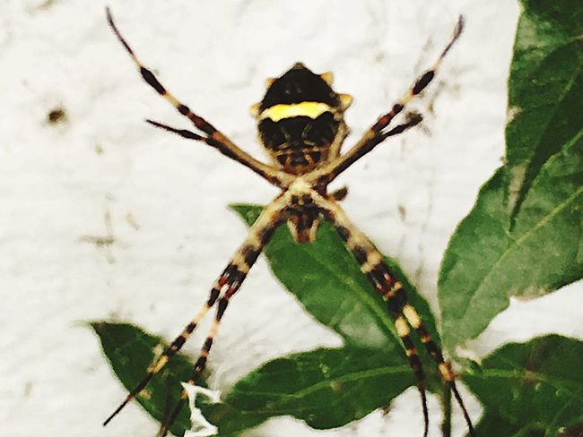 Spider X / Insect Animal Themes One Animal Close-up Wildlife Nature Outdoors Beauty In Nature Day Animals In The Wild No People Fragility Rosario Argentina Exterior Spider Yellow Yellow Eyes Stick Plant Laurel  Net Villa Regina