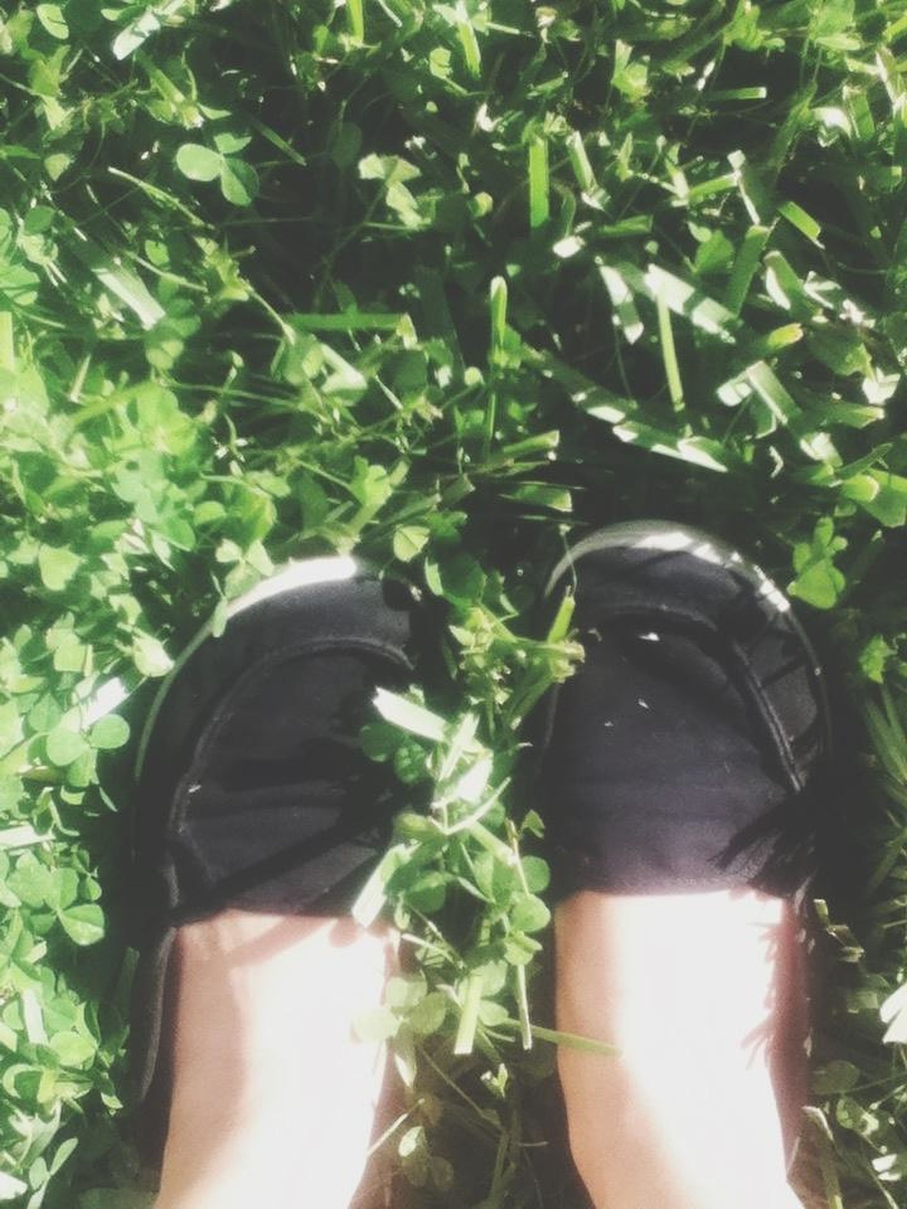 leaf, plant, green color, growth, personal perspective, nature, close-up, shoe, high angle view, sunlight, day, part of, outdoors, green, beauty in nature, lifestyles, unrecognizable person