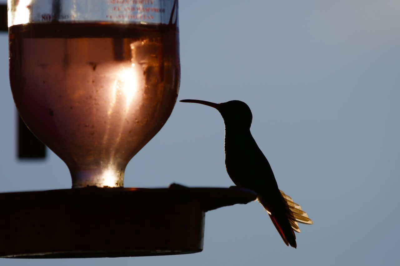 Alcohol Close-up Day Drink Food And Drink Hummingbird No People Silhouette Wine Wineglass